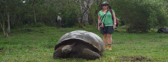 Galapagos tortoise in the Galapagos Islands