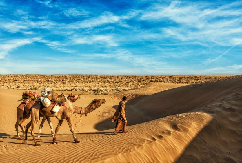 Man with camels in the Thar desert near Jaisalmer in India