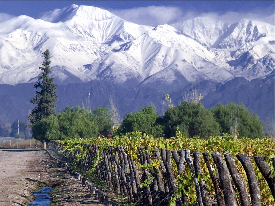 Maipo Valley Chile vineyard