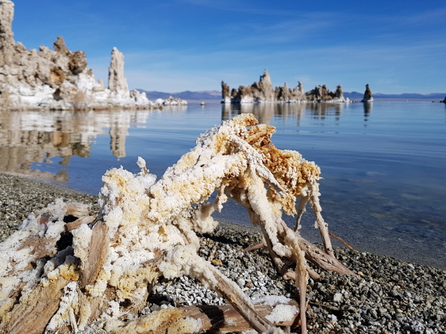 Crystallized salt on a plant at Mono Lake