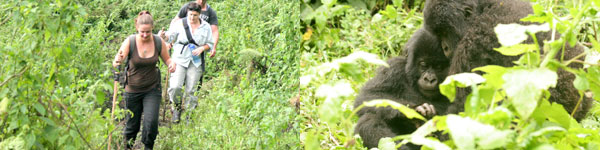 trekking to see Mountain Gorillas in the Virungas National Park in Rwanda