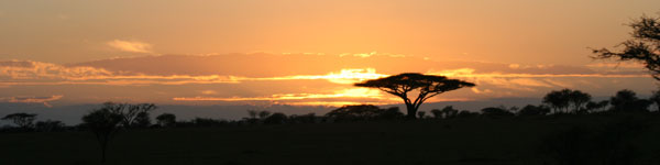 Acacia tree silhouetted by the sunset in Kruger National Park