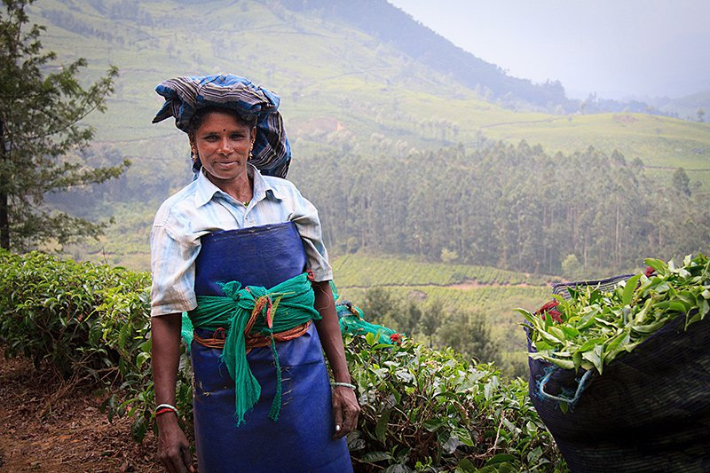 Tea picker in South India