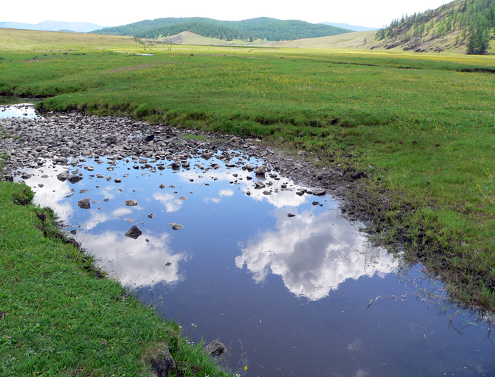 Fresh water marshlands in Mongolia