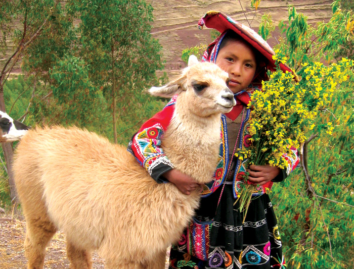 Alpaca being hugged by a local Peruvian girl